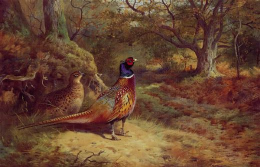 archibald thorburn on the alert paintings
