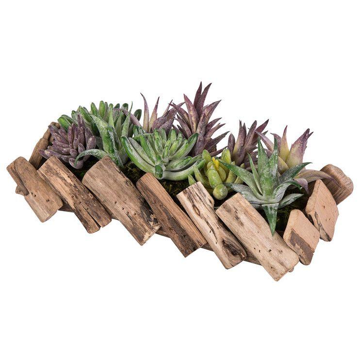 12-in. Succulent in Driftwood Arrangement