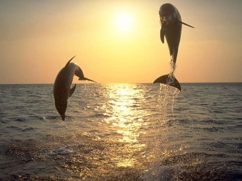 Dolphins ..<3