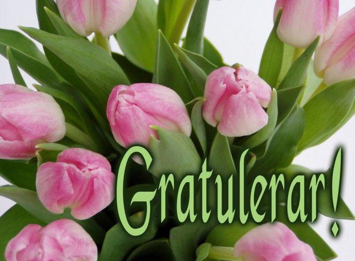 gratulerar Gratulerar tulpaner   Grattis på födelsedagen / Happy Birthday in  gratulerar