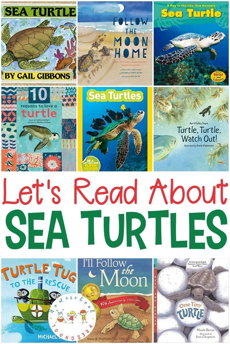 25 of the Most Engaging Sea Turtle Books for Kids   Pinterest ...