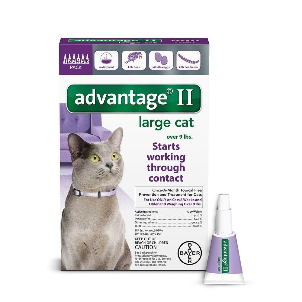 Advantage Purple 20 6 Flea Control For Cats And Kittens Over 9 Lbs 6 Month Supply Flea Control For Cats Fleas Cats Kittens