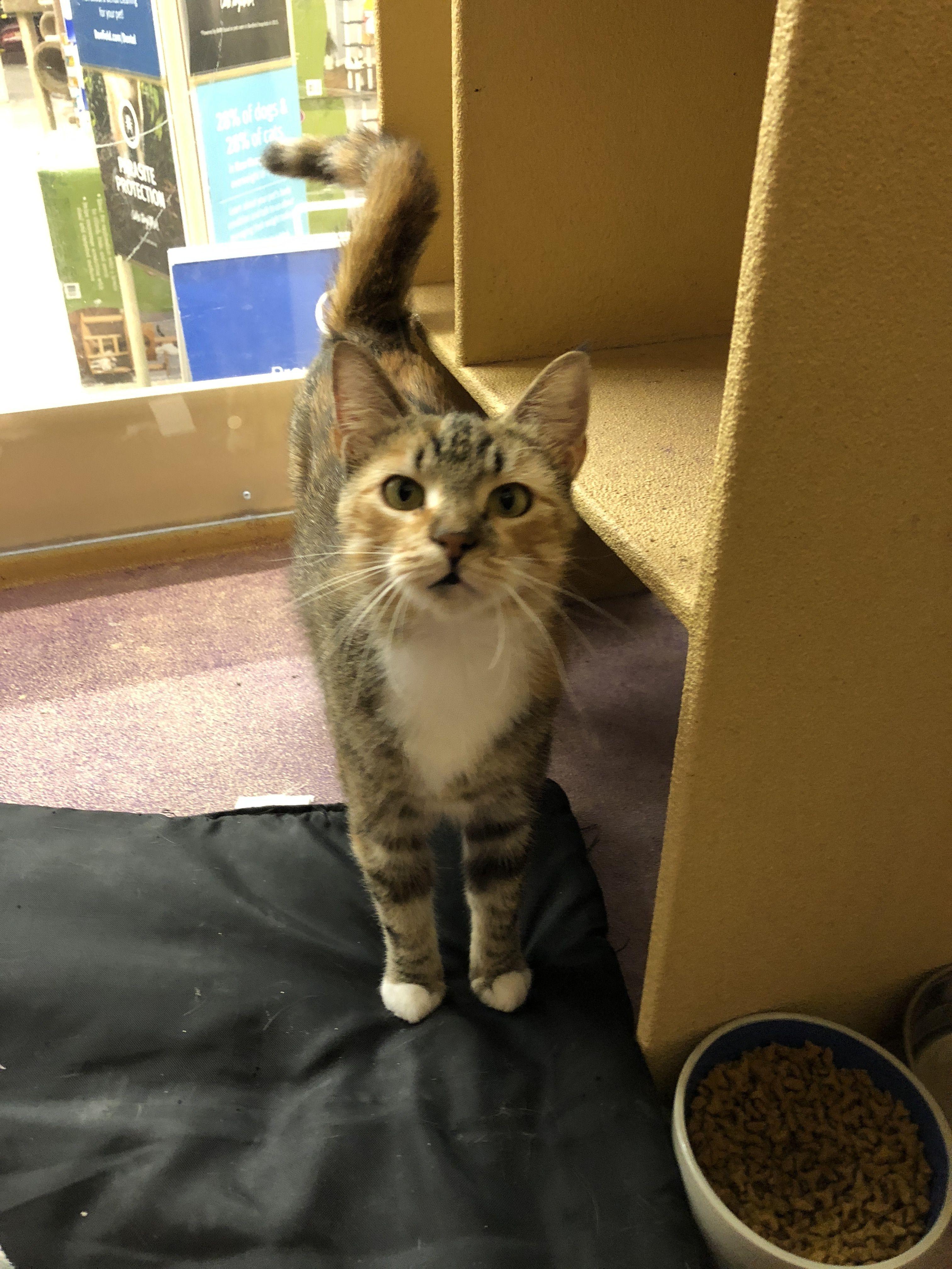 Adopt Amber on Cat urine, Cats, kittens, Dog cat