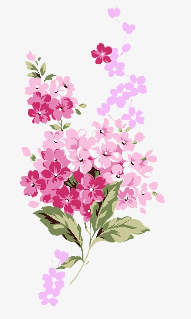 Millions Of Png Images Backgrounds And Vectors For Free Download Pngtree Blossoms Art Flower Painting Flower Drawing