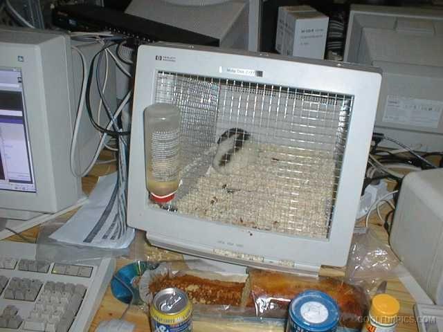 office pet ideas. hahaha - cool idea for a desktop office pet! pet ideas