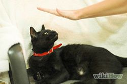 Stop A Cat From Biting And Scratching Cat Biting Cat Care Kitten Biting