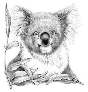 Pin Von Annegret Kornek Auf Koalala Tiere Zeichnen Zeichenvorlagen Tierkunst