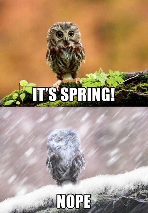 Seasons That Last Approximately Four Days Funny Owls Funny Animals Funny Pictures