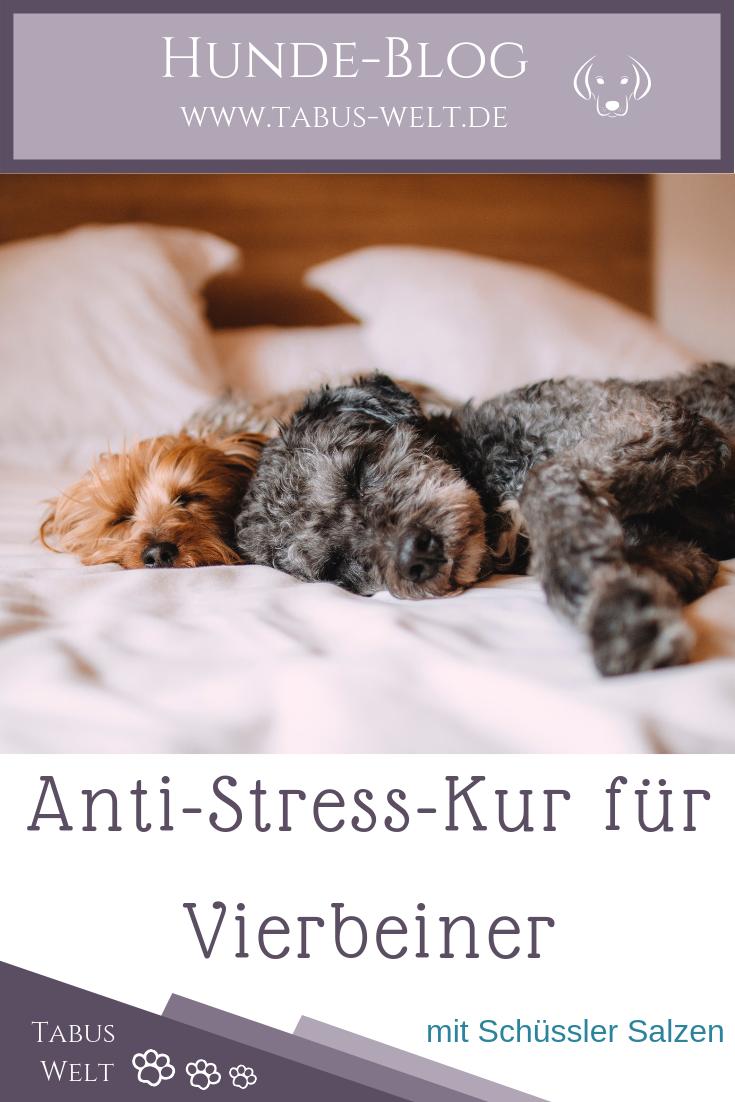 Anti Stress Kur Fur Den Vierbeiner Mit Schussler Salzen Anti