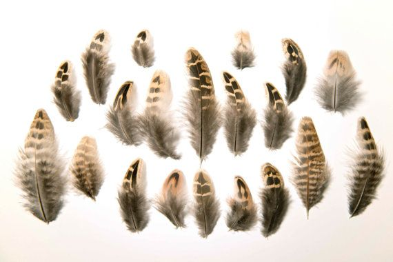 Natural Female Pheasant Wing Feathers Brown Striped Ethically Sourced 12-15cm