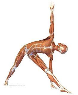 asana series utthita trikonasana  yoga for men triangle