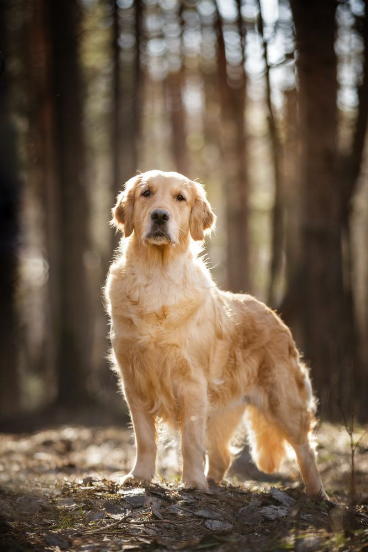 Meet Huckleberry A Golden Retriever From Texas Who Despite Your Concern Loves Hanging Out On His Owner S Roof Dogs Dog Love Puppies