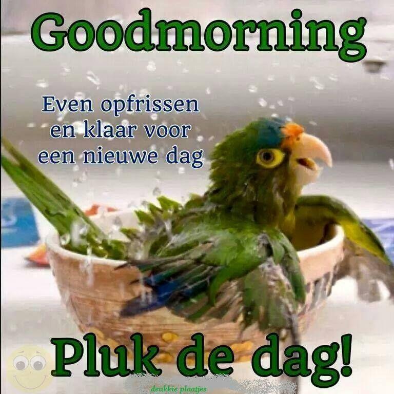 Citaten Voor Goedemorgen : Pluk de dag goeiemorgen pinterest goedemorgen