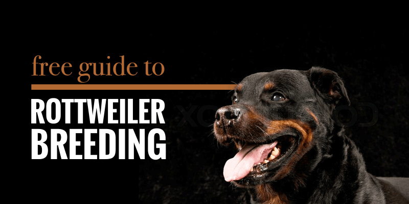 63+ Rottweiler Dogs For Sale Near Me in 2020 Rottweiler
