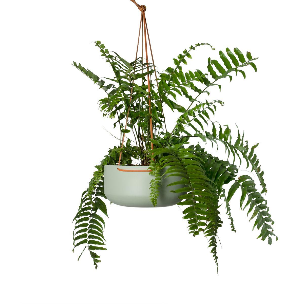 Hanging Planter Large Sage In 2019 Gardening Indoor Plants Large Planters Hanging Planters Planters