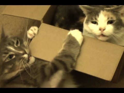Female cat very annoyed with her brother - YouTube