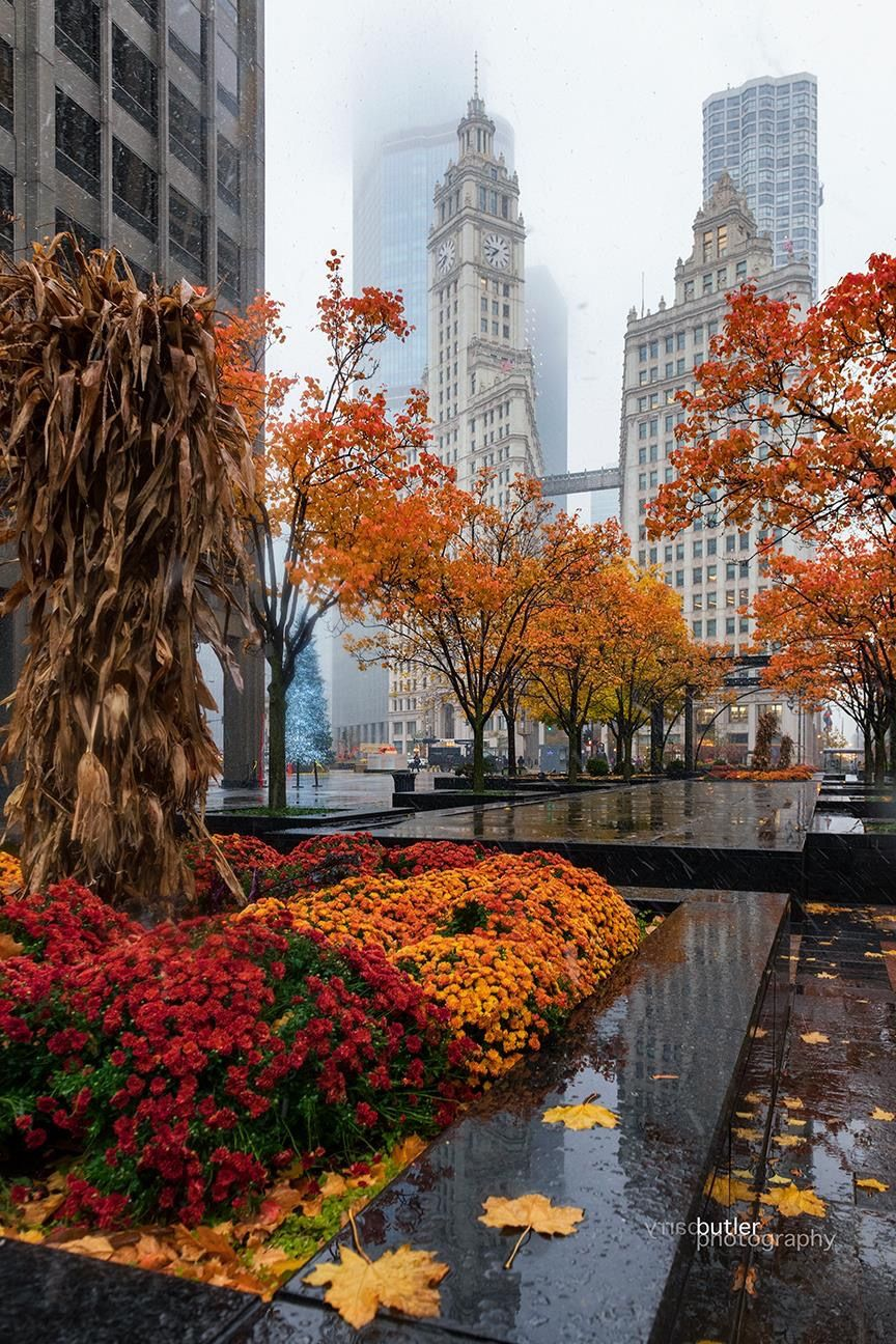 Cold Fall Morning In Downtown Chicago Chicago Pictures Chicago Fall Chicago Photos