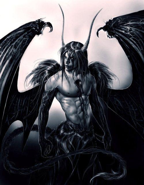 Stryge Noir ♂