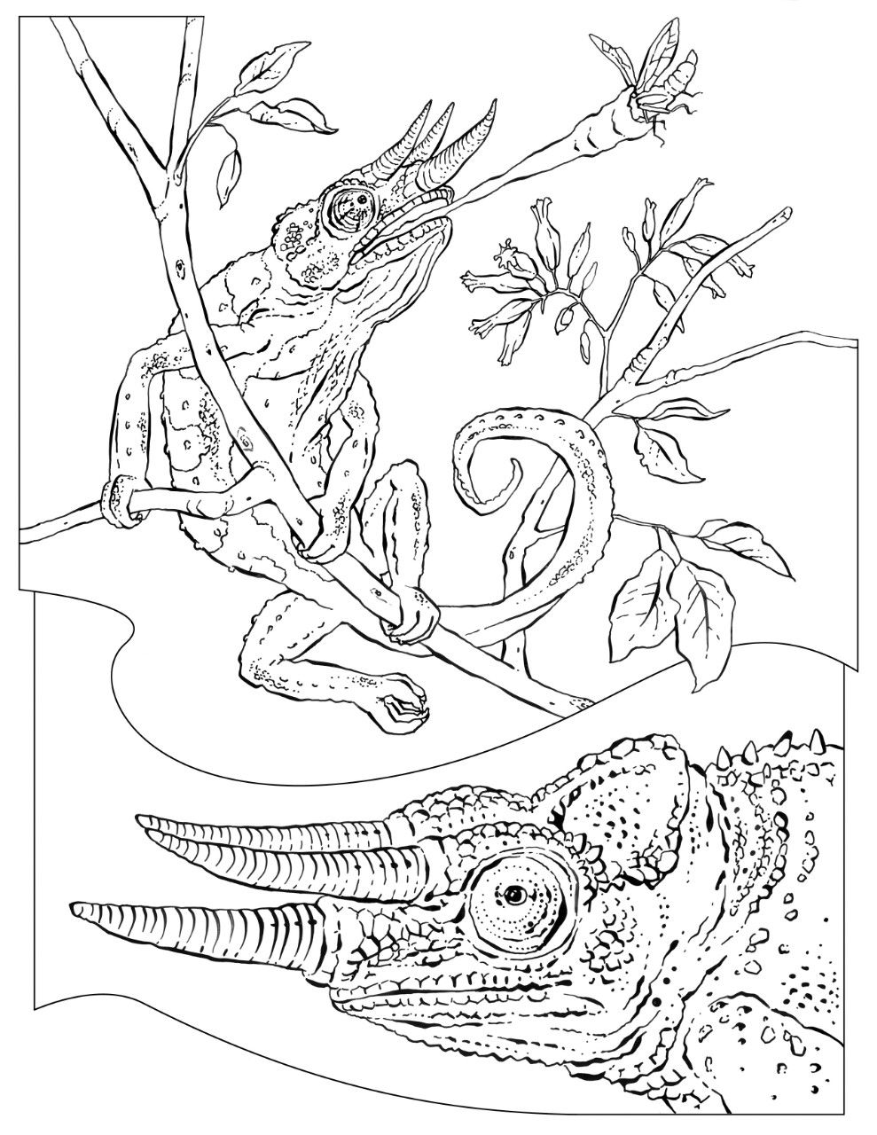 Coloring Book: Animals (J to Z)