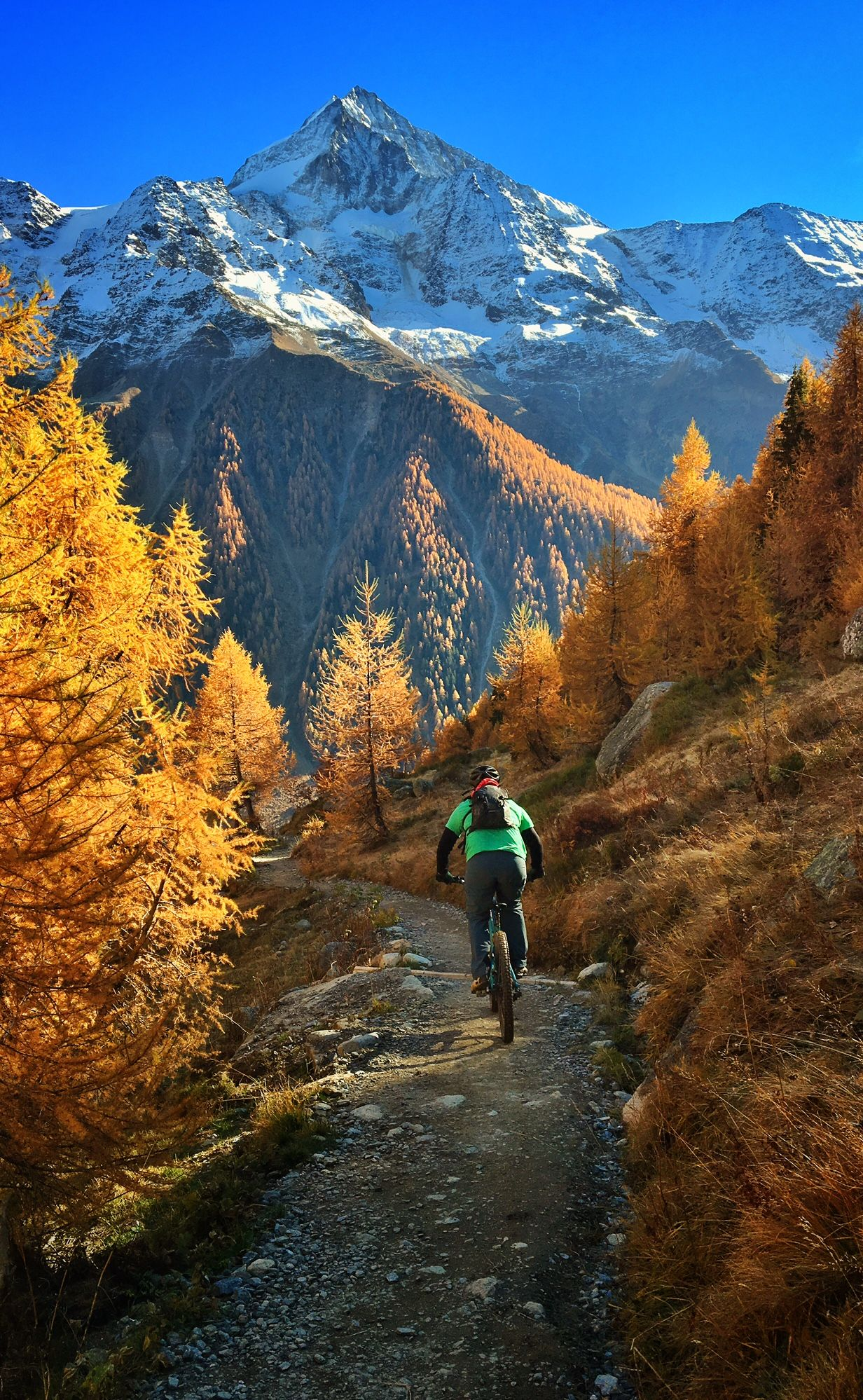 Mountain Biking In The Yellow Larch Trees In The L