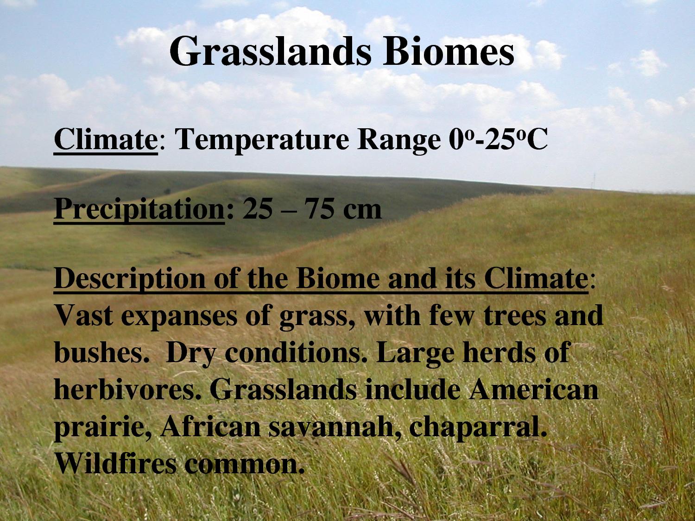 Grasslands Biomes by ert554898 Biomes, Grassland biome