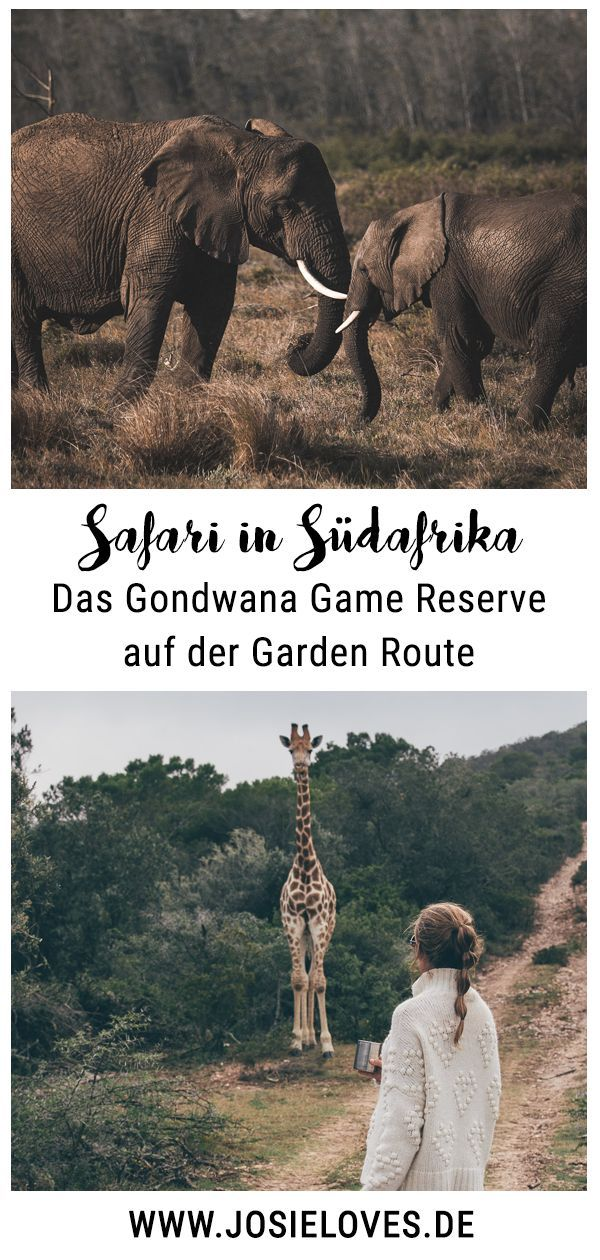 Unser Südafrika Roadtrip: Teil Zwei | Südafrika | Safari ...
