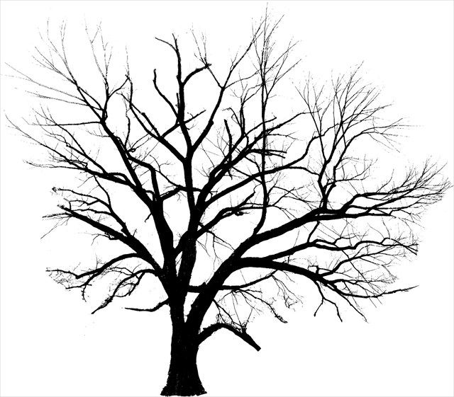 American Elm Silhouette Tattoos Elm Tree Tree Line Drawing