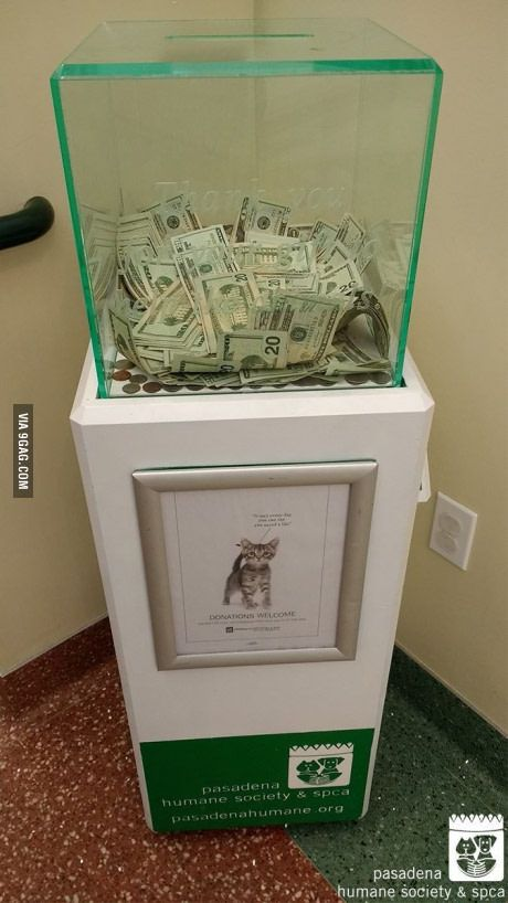 Anonymous Visitor Dropped In 8 000 In Cash At This Animal Shelter Whoever You Are Thank You Animal Shelter Donations Donation Box Animal Shelter Fundraiser