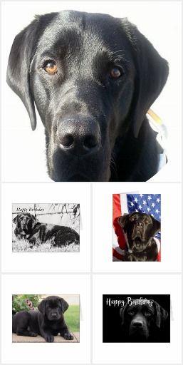Labrador Birthday Greetings Card Puppies Pinterest Birthday