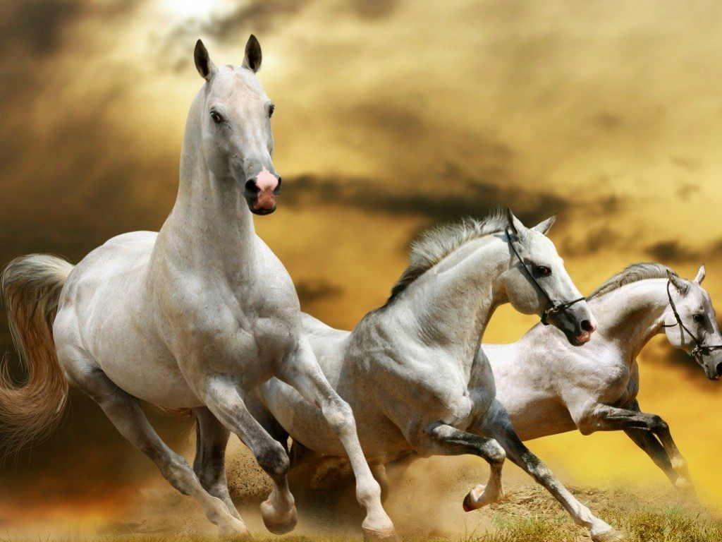 horse wallpaper hd | White Horse images HD Wallpapers | Live HD Wallpaper HQ Pictures ...