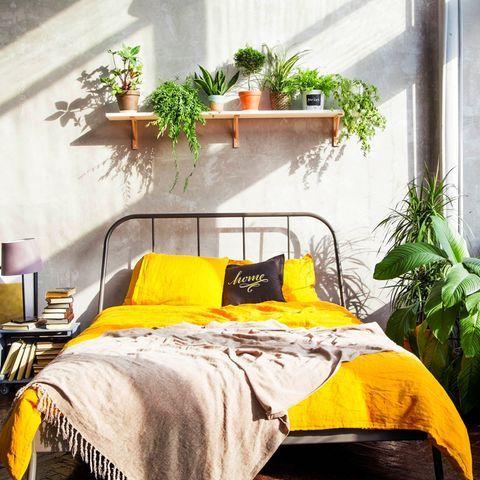 Pflanzen im Schlafzimmer darauf solltest du achten (mit