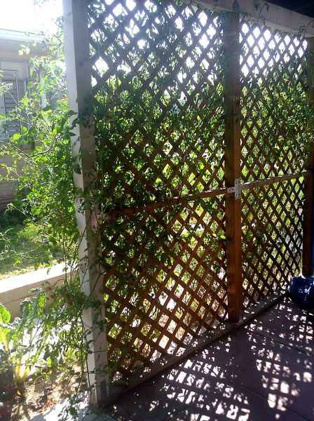 The view from inside Mary Morris' front porch, screened by ...