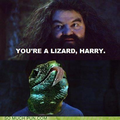 Funny Sirius Black Quotes       Much Pun - Hagrid - Visual Puns and