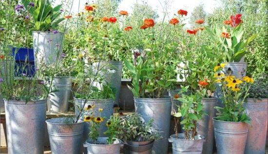 kleines topfgarten mit stil cool pic und faaccacaa