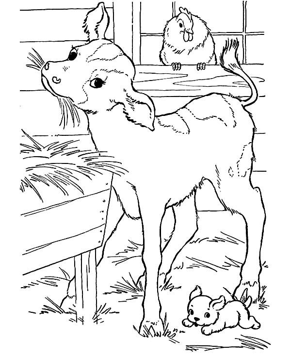 Pin Oleh Netart Di Cow Coloring Pages Halaman Mewarnai Hewan Gambar Hewan