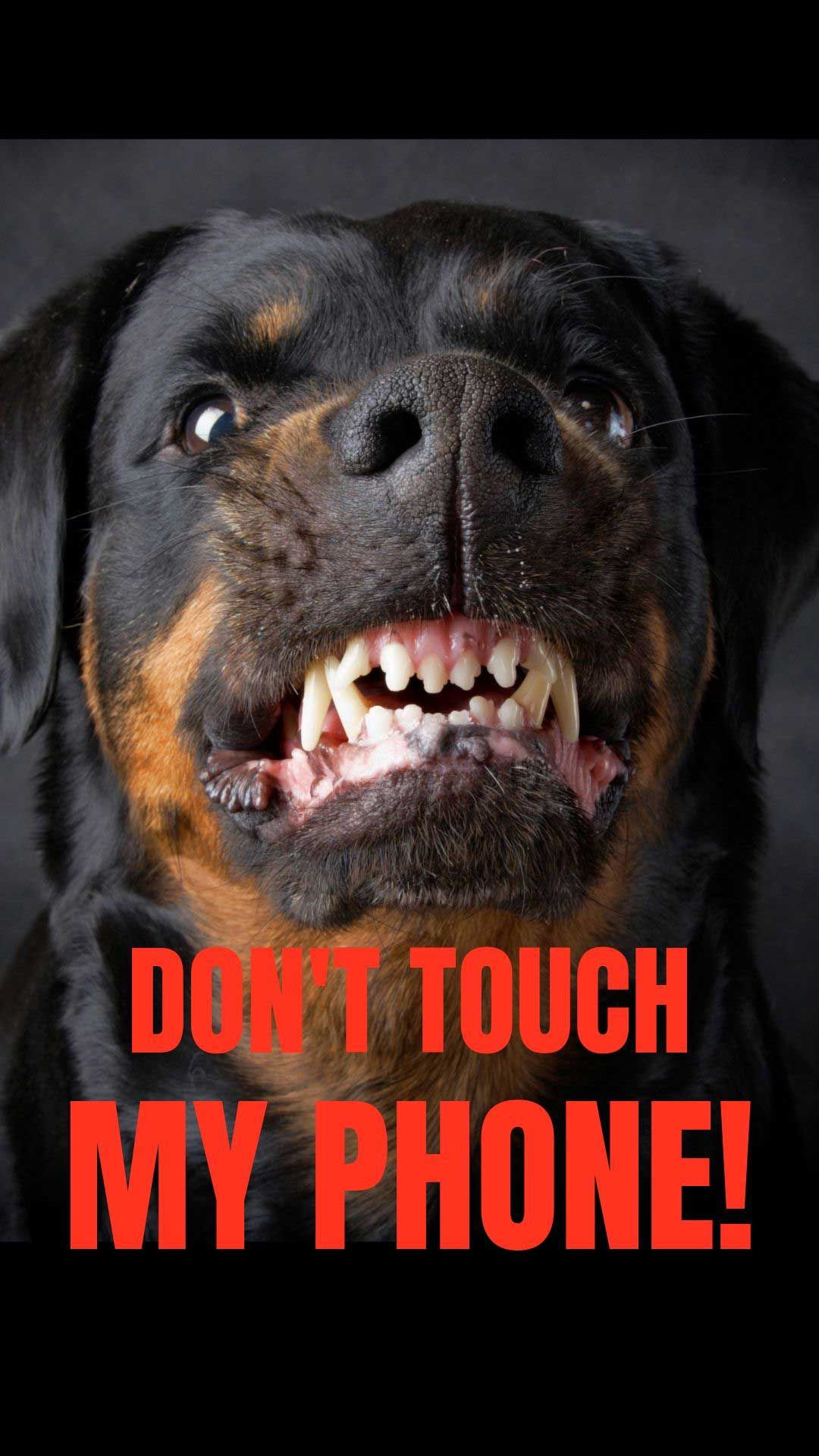 20 Free Dog Wallpapers I Phone And Android 20 Hd Sized Homescreen Wallpaper Dog Pictures Dont Touch My Phone Wallpapers Don T Touch My Phone Funny Phone Wallpaper