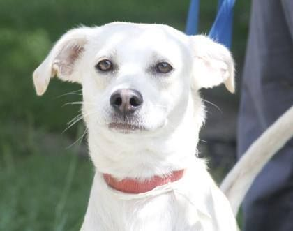 INDICA ready for adoption.  Did she find a good house?