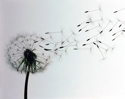 I love Dandelions. Every time I see one I just want to make a wish and BLOW.....