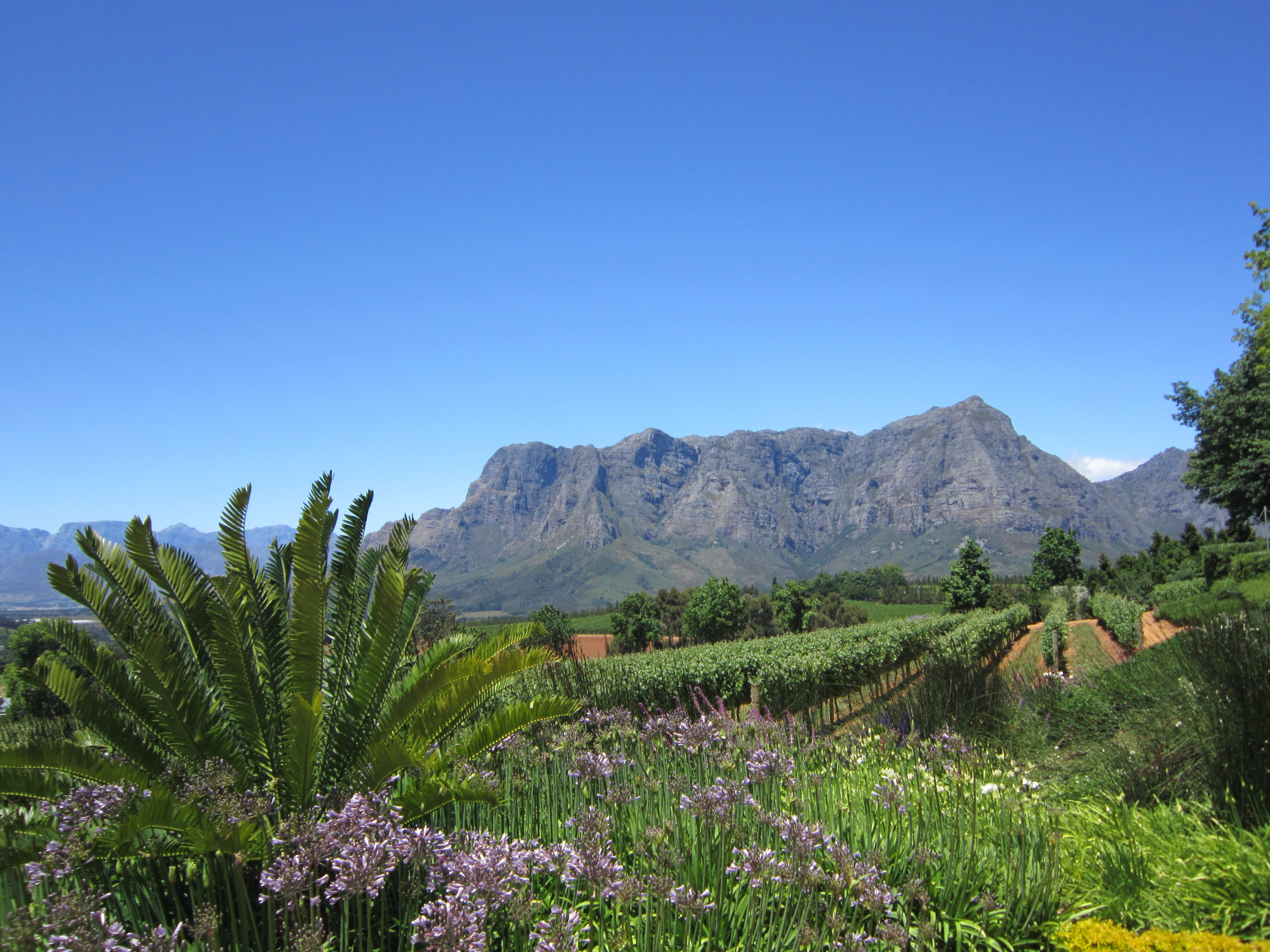 Stellenbosch - South Africa. Simply beautiful and fantastic food & wine!