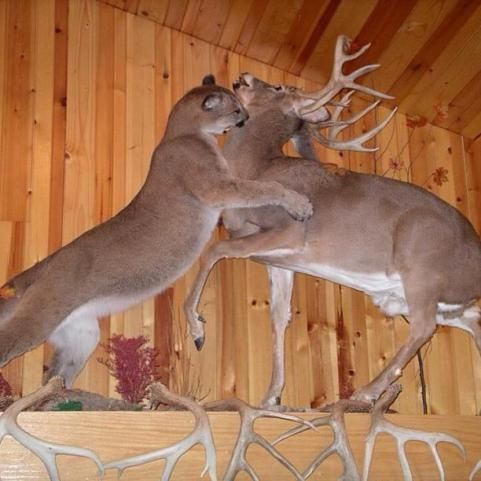 Need This In The Basement Dead Animals On The Wall In