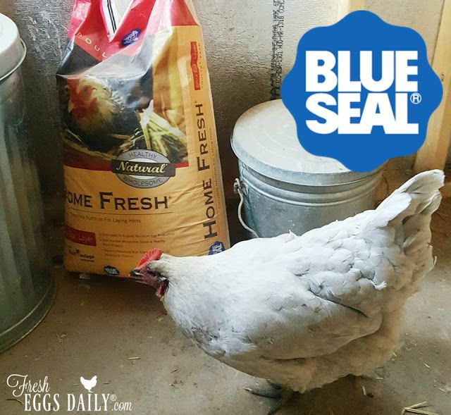 My Chickens Love Blue Seal/Kent Feeds