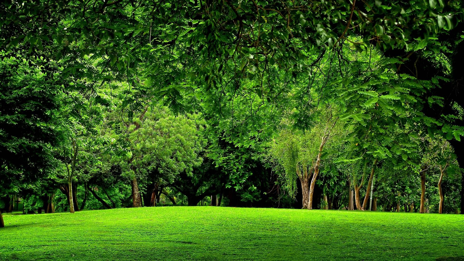 Beautiful Nature Forest Wallpaper 1920x1080 Green Landscape Forest Wallpaper Forest Scenery