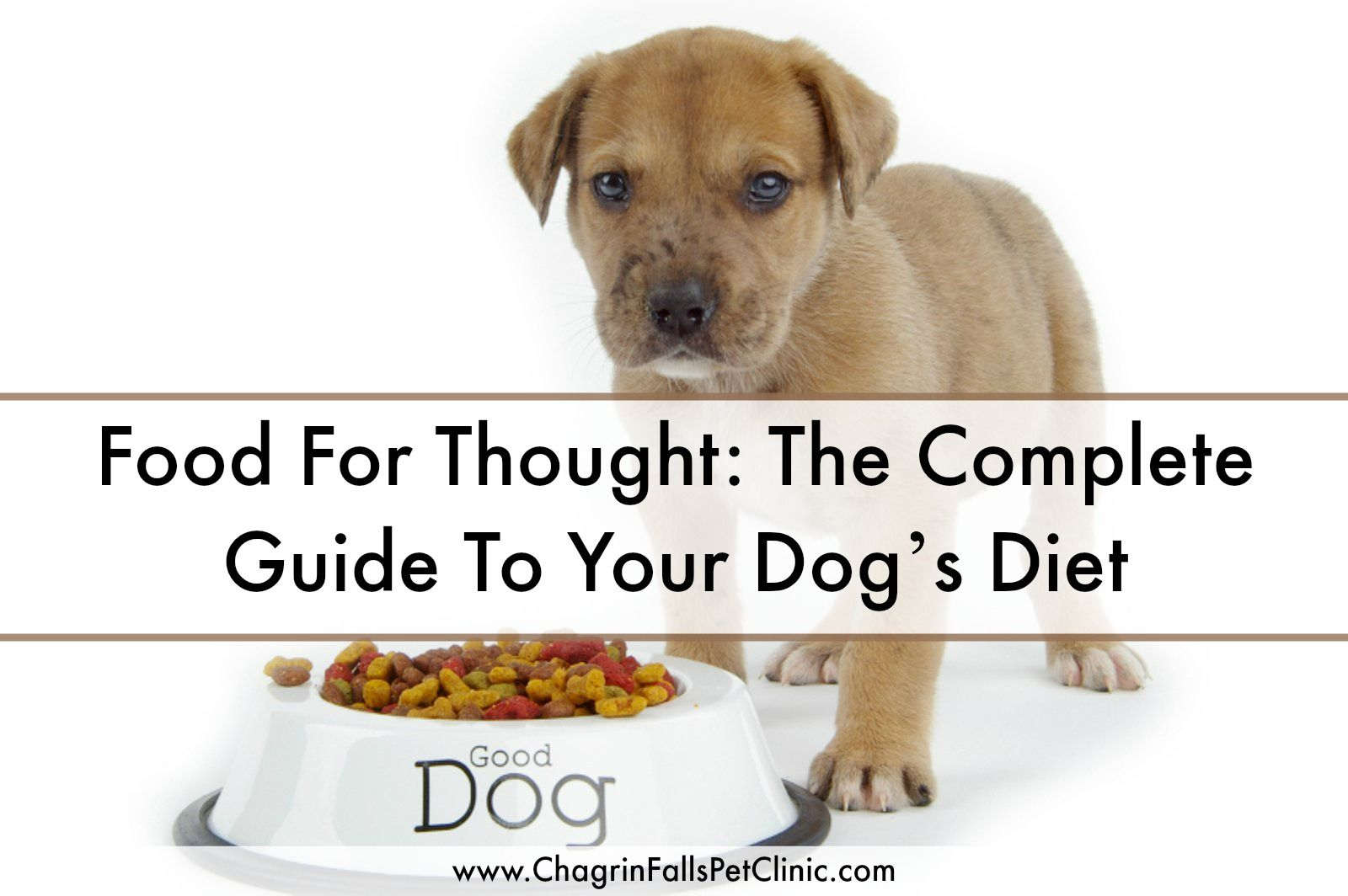 Food For Thought The Complete Guide To Your Dog S Diet Chagrin Falls Veterinary Center Pet Clinic Dog Diet Animal Nutrition Cat Nutrition