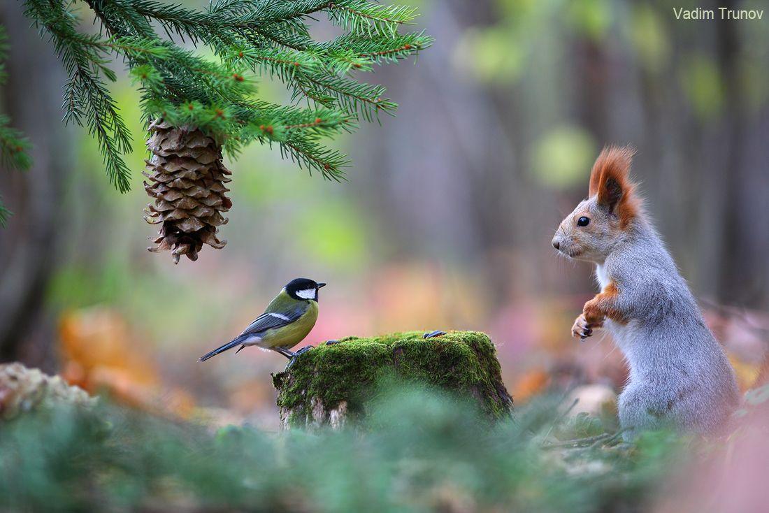 черная лесные животные фото новогодние милые друг