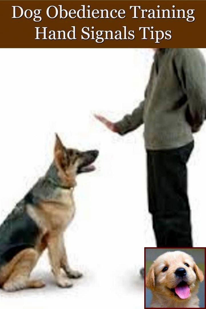 Caring For Your Dog Entails Work You Ve Got To Be Confident That You Ve Got Plenty Of Time To Dedica Dog Training Obedience Dog Training Dog Behavior Problems