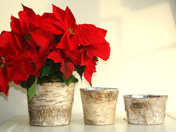 Poinsettia Birch Bark Vases Christmas Decor Ideas Birch Bark Wood Vases Pot Poinsettia Rustic Planter Poinsettia Centerpiece Wood Vase Rustic Planters