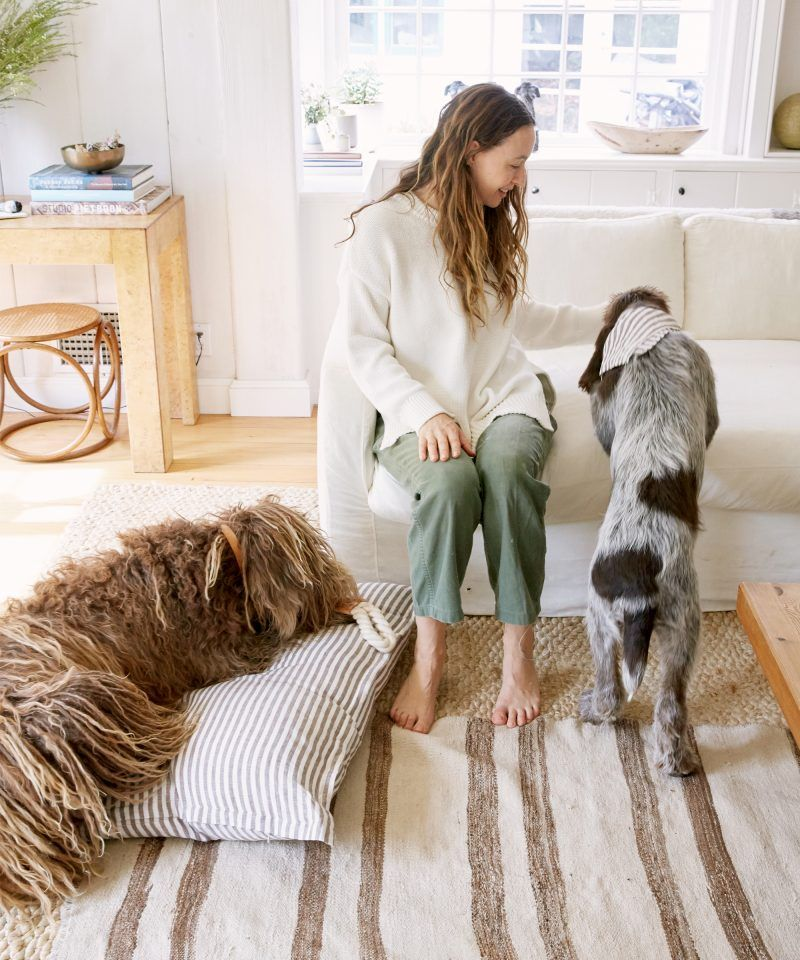 Introducing The Jenni Kayne Pet Collection Pets Find Pets Collection