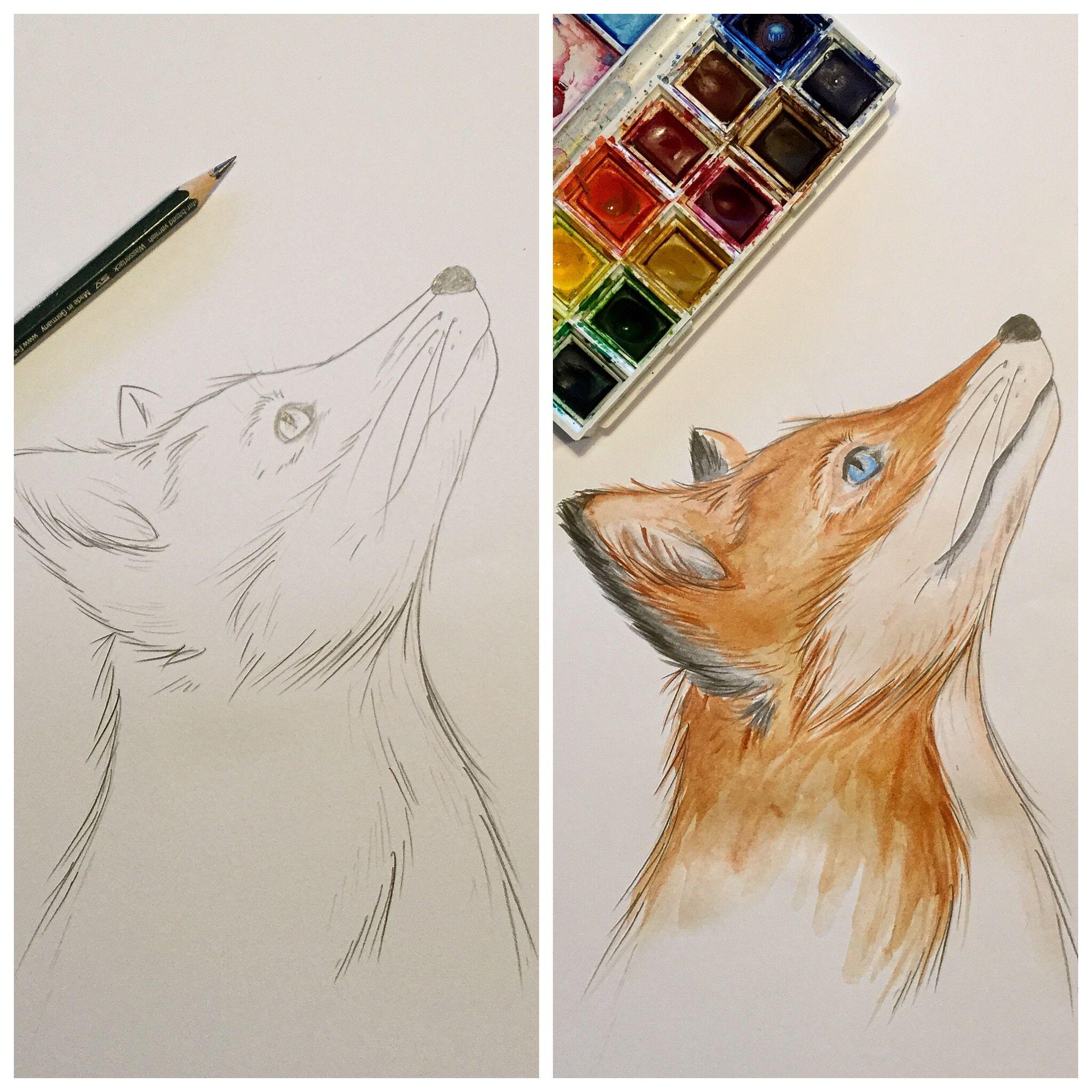 Fuchs Bleistift Und Aquarellfarben Fuchs Zeichnung