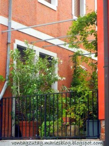 Von Tag zu Tag - Maries Blog: Gärtnern ohne Garten - Bella Venezia