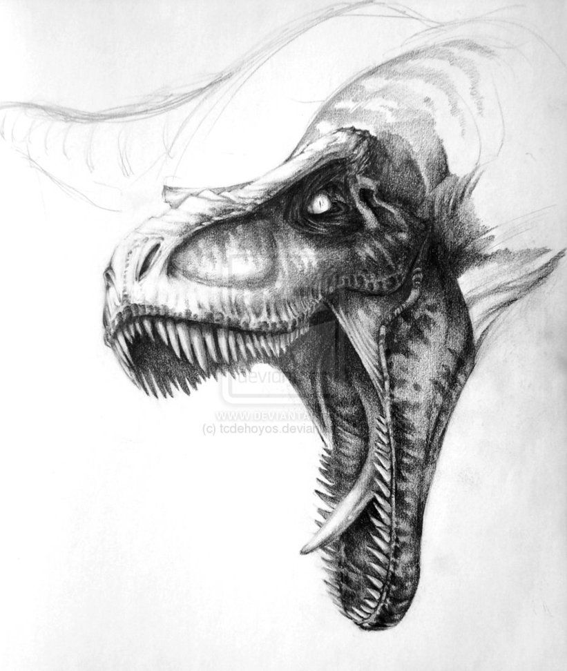 t_rex_sketch_by_tcdehoyos-d38k0sl.jpg (821×972) | ideas para dibujar ...